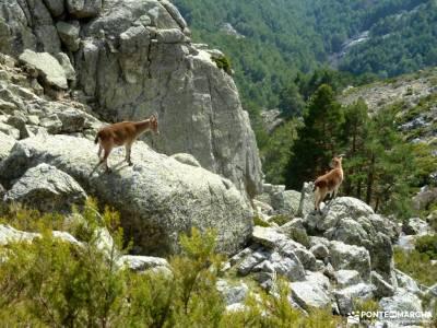 Guadarrama;Pico de la Najarra-ruta laguna grande gredos castillo coca segovia fotos moncayo